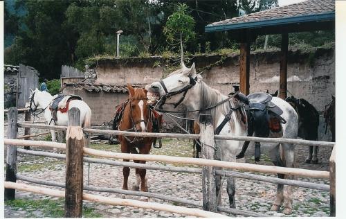 horses at cusin