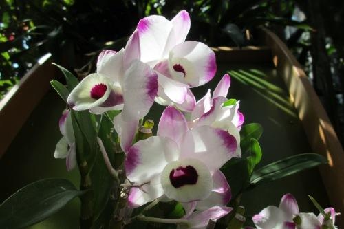 Orchids; Photo:KFawcett