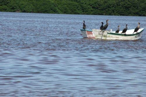 Birds in a boat, Celestun Reserva Ecologica de los Petenes, Celestun, Yucatan; Photo:KFawcett