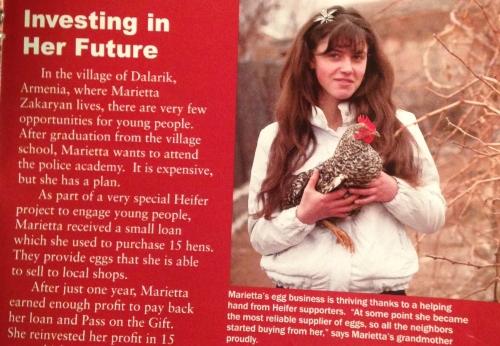 Chicks for Heifer International...