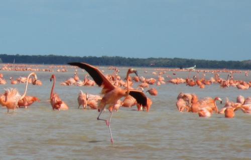 On the Rio Celestun, Yucatan, Mexico; Photo:KFawcett