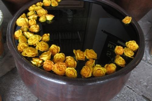 Yellow roses; Photo:KFawcett