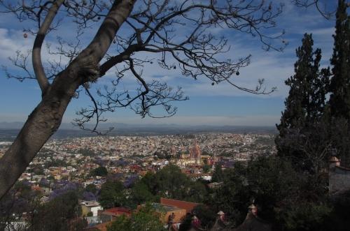 Jacarandas, San Miguel de Allende, Guanajuato, Mexico; Photo:KFawcett