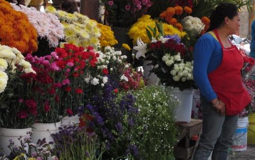 flowers, San Miguel de Allende; Photo:KFawcett