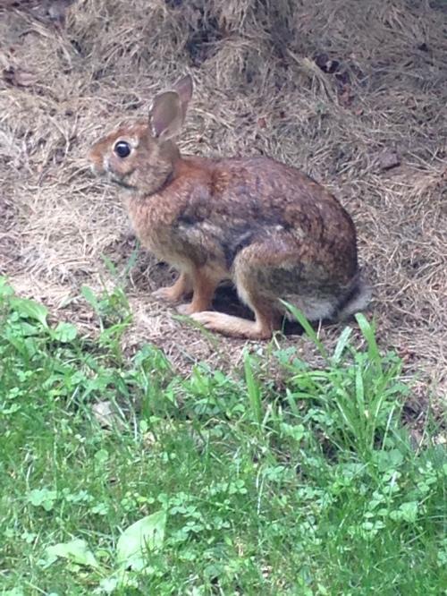 Bunny; photo:KFawcett