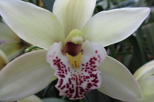 Orchid; Photo:KFawcett