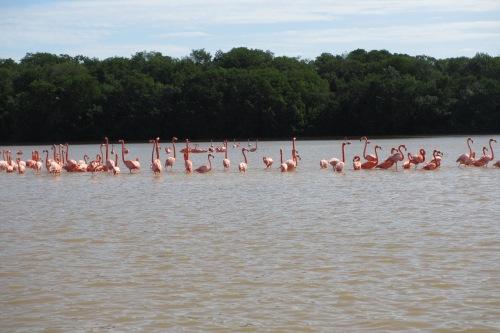 Flamingos, Celestun, Yucatan, Mexico; Photo:KFawcett