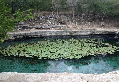 Cenote Xlacah, Dzibilchaltún, Yucatán; Photo:KFawcett