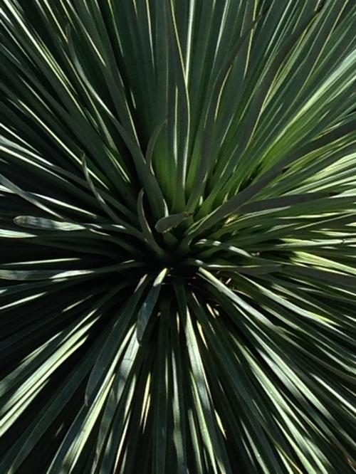 Cacti, San Miguel de Allende; Photo:KFawcett